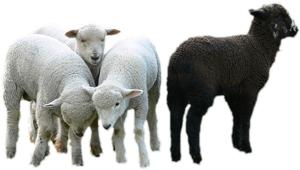 Baa-baa black sheep…